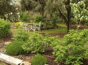 Hemos terminado poda nuestras lavandas (Lavandula) romeros (Rosmarinum officinalis)?