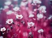 Todas flores corazón