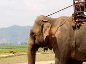 Dónde pasear elefantes Vietnam