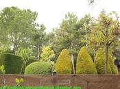 Diseño jardín: jardín vecinos