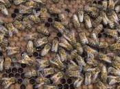 Ecuador familiariza bondades abejas