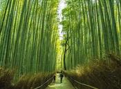 "Bosque bambú Arashiyama Kioto esta ""llorando"" vandalismo"