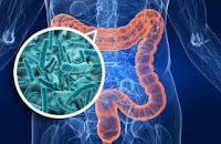 Relacionan Bacterias Intestinales Respuestas Antitumorales