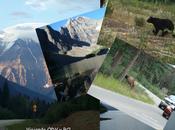Ruta completa todo debes saber para visitar rocosas canadienses