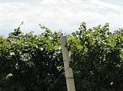 poder antioxidante Uva.