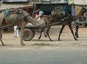 India Norte. Jaipur