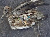 """Albatross"", muerte plástico"