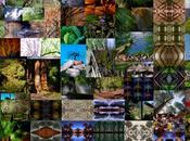 ARBOREO: bosque cien árboles setecientos días
