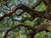 Cíentificos descubren árboles también tienen corazón