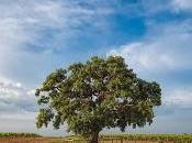 Woodzymes nuevo prometedor proyecto Europeo