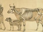 Atlas animal anatomy artists