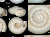 género Spelaeodiscus Montenegro Albania