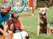 encantador perros Cesar Millan opta cesped artificial para centro canino