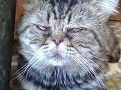 Mañana levanto temprano hago