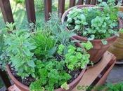 Cómo hacer huerto plantas aromáticas medicinales