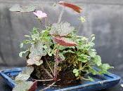 Plantas acento lajas para acentos