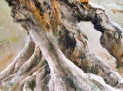 Olivos otros árboles
