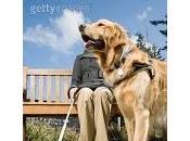 Cómo tratar perros lazarillos