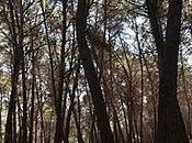 paseo bosque