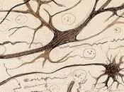 enfermedad Alzheimer asocia variantes comunes ciertos genes.