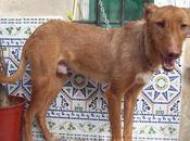 Cupper, podenco invisible (Murcia)‏
