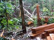 relación entre deforestación desastres naturales Bolivia