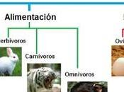 Tipos Animales