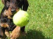 Comentario Juegos para compartir perro Bajar sella