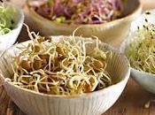Propiedades Beneficios Brotes Alfalfa
