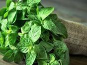 Menta: impresionantes beneficios esta planta
