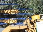máquina definitiva para olivar