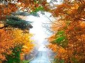 Consejos para conducir otoño