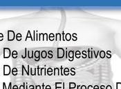 Funciones sistema digestivo
