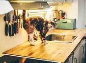 básicos menaje cocina