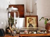 crea propio terrario plantas aéreas bilbergias