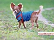 enfermedades comunes perro: síntomas tratamiento