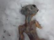 video alien Siberia