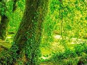Verde rincón romántico