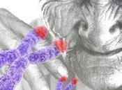 solución telomeros