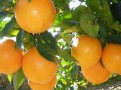 Naranjas: verdades mitos sobre propiedades
