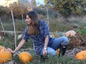 Eligiendo calabazas Halloween