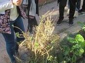 Actividades otoño huerto; semillas, esquejes, siembra
