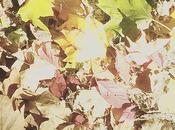 Trucos para capturar otoño cámara