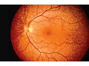 Logran integrar Células Fetales Retina generando Actividad Visual