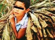 Argentina: Gobernador autoriza niños trabajen tabacaleras, plantaciones, sector textil otros grupos comerciales.