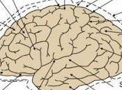 Estructura cerebro (externa)