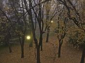 Luces mágicas entre árboles niebla