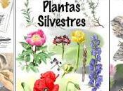 Publicados primer Cuaderno Campo Guías Mariposas Plantas silvestres