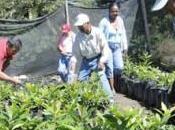 Cultivo alternativo chirimoya Ecuador