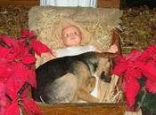 Este perrito callejero durmió pesebre acabó ocurriendo milagro navideño